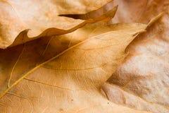 O outono vem Foto de Stock