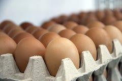 O ovo de Chicken's pôs a perspectiva alinhada na bandeja de papel do ovo foto de stock royalty free
