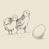 O ovo do pintainho Imagem de Stock Royalty Free