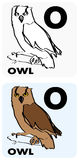 O for Owl Royalty Free Stock Images