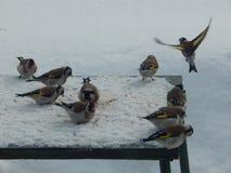 O pássaro é um busardo no selvagem Fotografia de Stock Royalty Free