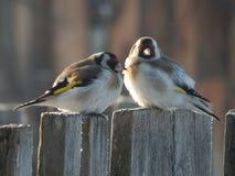 O pássaro é um busardo no selvagem Fotos de Stock Royalty Free