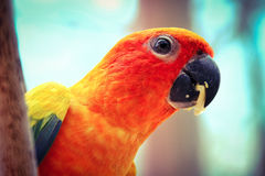 o pássaro Fotos de Stock