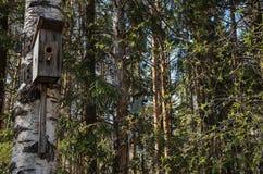 O pássaro abriga a suspensão no vidoeiro e no pinho no parque Imagem de Stock