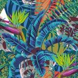 O pássaro abstrato da cor da banana do baradise sae do fundo da begônia ilustração do vetor