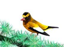 O pássaro amarelo Fotos de Stock Royalty Free