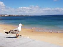 O pássaro aprecia a vista sobre o mar foto de stock royalty free
