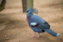 O pássaro azul Imagens de Stock Royalty Free