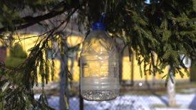 O pássaro bica sementes dos alimentadores Alimentador fora de uma lata de lata titmouse vídeos de arquivo