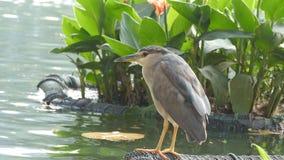 O pássaro bonito senta-se na costa do lago Fim acima filme