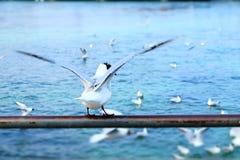 O pássaro começa voar Foto de Stock Royalty Free