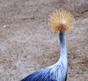 O pássaro da cabeça da lâmpada Fotografia de Stock