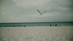 O pássaro da gaivota decola o voo sobre o Oceano Pacífico Movimento lento filme