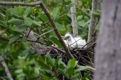 O pássaro de bebê olha o mundo Imagens de Stock Royalty Free