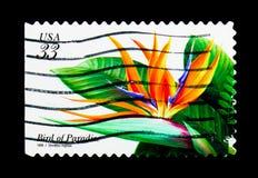 O pássaro de paraíso, flores tropicais emite o serie, cerca de 1999 Fotografia de Stock Royalty Free