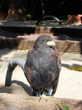 O pássaro de Pray Imagens de Stock