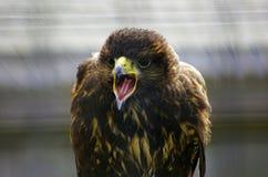 O pássaro de Pray Imagem de Stock Royalty Free