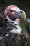 O pássaro de Pray Fotografia de Stock Royalty Free