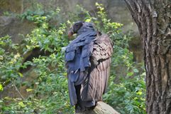 O pássaro de Pray Fotografia de Stock