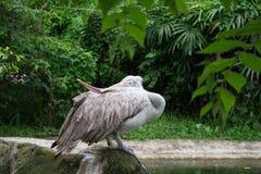 O pássaro deficiente da garça-real Boca anormal na garça-real fotos de stock royalty free