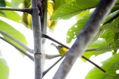 O pássaro discreto foto de stock royalty free