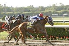 O pássaro do verão ganha as estacas 2009 de Belmont Foto de Stock