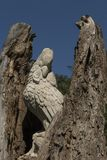 O pássaro duradouro Phoenix é nascido outra vez das cinzas fotografia de stock