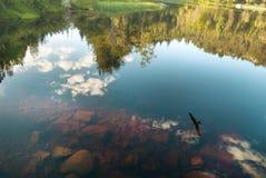 O pássaro e o céu refletem no lago norueguês Fotos de Stock Royalty Free