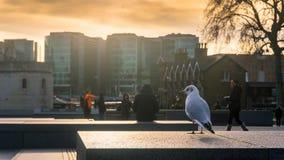 O pássaro e o por do sol Fotografia de Stock Royalty Free