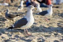 O pássaro está na praia Fotos de Stock Royalty Free