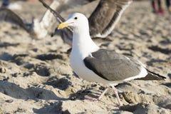 O pássaro está na praia Imagens de Stock