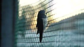 O pássaro está tentando voar à liberdade filme