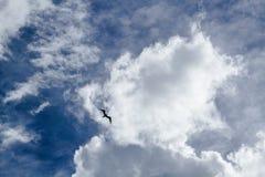 O pássaro está voando altamente no céu azul e nebuloso fotografia de stock