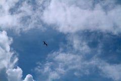 O pássaro está voando ao redor e ao redor no céu nebuloso imagens de stock