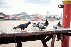 O pássaro estranho Fotografia de Stock Royalty Free