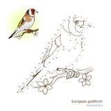 O pássaro europeu do pintassilgo aprende tirar o vetor Foto de Stock Royalty Free