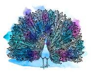 O pássaro Handdrawn bonito do pavão consiste muitos detalhes ilustração stock