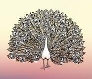 O pássaro Handdrawn bonito do pavão da ilustração do clipart consiste muitos detalhes ilustração do vetor