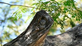 O pássaro manchou o filhote de coruja, coruja em uma natureza selvagem vídeos de arquivo