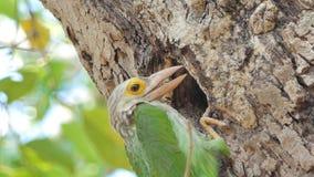 O pássaro masculino está alimentando o pássaro fêmea nos ninhos vídeos de arquivo