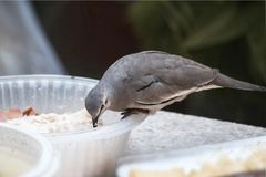 O pássaro olha primeiramente imagem de stock