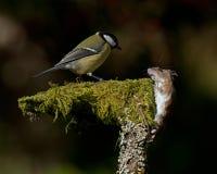 O pássaro pequeno encontra um rato da floresta imagens de stock royalty free