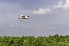 O pássaro pequeno espalhou suas asas e boca. Foto de Stock