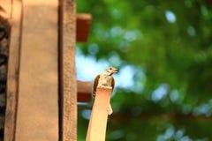 O pássaro pequeno está na madeira foto de stock royalty free