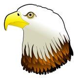 O pássaro poderoso da águia calva Pray Imagens de Stock
