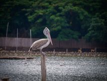 O pássaro só no jardim zoológico Fotos de Stock