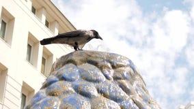 O pássaro sedento, corvo bebe a água de uma fonte no dia de verão quente fora vídeos de arquivo