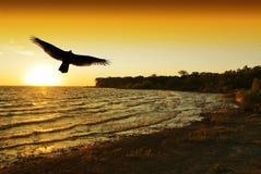 O pássaro toma o vôo no nascer do sol fotografia de stock royalty free