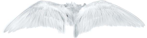 O pássaro voa o branco Fotografia de Stock