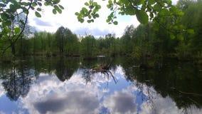O pântano Foto de Stock Royalty Free
